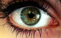 oeil homme